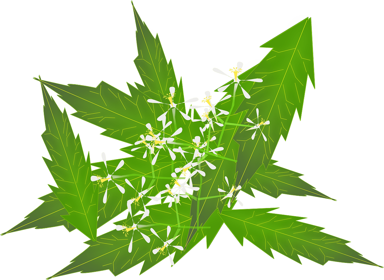 Ayurveda – The Science of Well Being