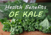 kale_health_benefits