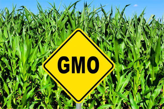 GMOs-food-farm-field