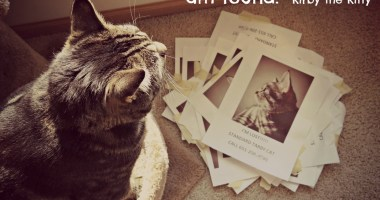 Sunday Snapshots: The Story of our Lost Cat