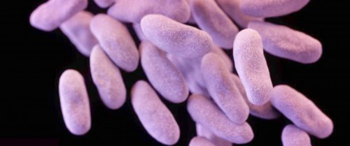 5.Superbug Development