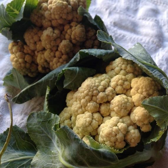 Off White to Light yellow Cauliflower