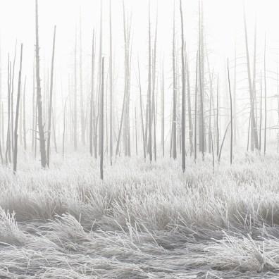 Jeff Vanuga: Yellowstone National Park