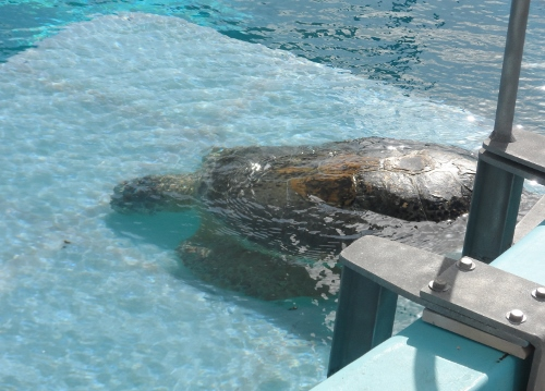 Bailey Clearwater Marine Aquarium
