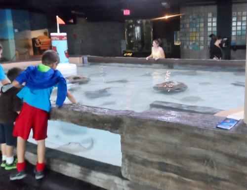 Florida Aquarium Tampa petting tank