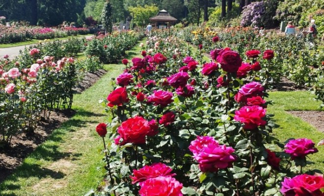 Entrance To Portland Rose Gardens : How much legroom do you really have or not on spirit