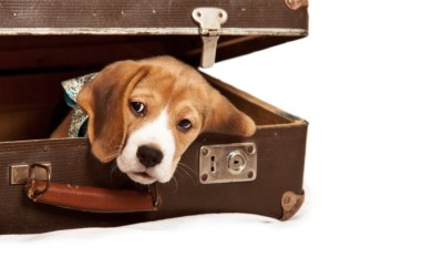 Puppy dog in suitcase
