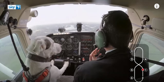 Mark Vette teaches dogs to fly