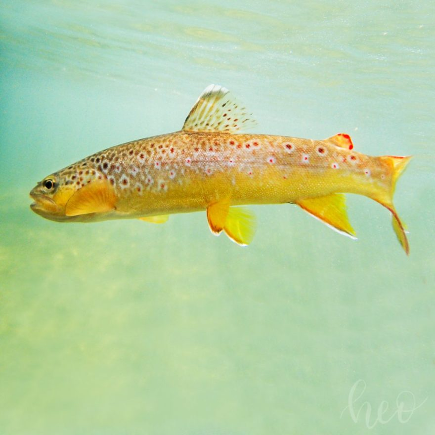 driftless fly fishing heidi oberstadt media photography