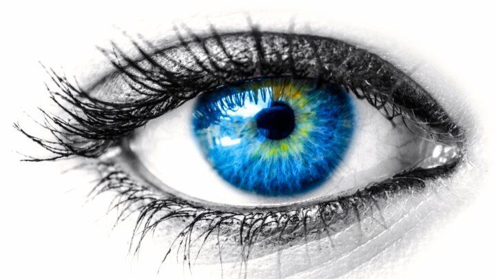 تطور العين - T.D.لامب