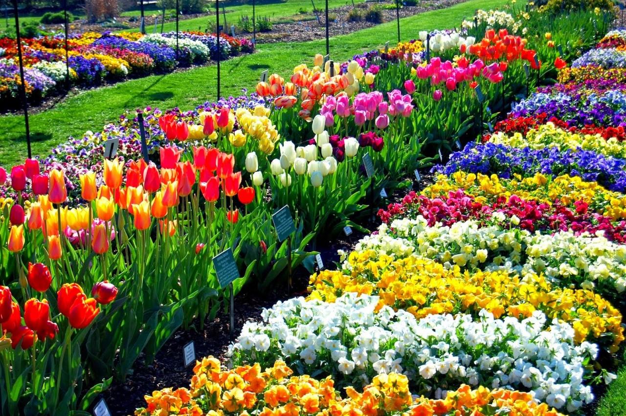 dallas_arboretum_bloom