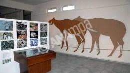 Φωτογραφία που δόθηκε σήμερα στη δημοσιότητα και εικονίζει εκθέματα του μουσείου Παλαιοντολογίας που βρίσκεται στην Κερασιά, στη Βόρεια Εύβοια. Ο καθηγητής του Πανεπιστημίου Αθηνών στο τμήμα Γεωλογίας και Γεωπεριβάλλοντος  Γιώργος Θεοδώρου ξεκίνησε τις ανασκαφές στην περιοχή το 1992 και το 2006 οργάνωσε την πρώτη έκθεση με τα ευρήματα των ανασκαφών του στο μουσείο παλαιοντολογικών ευρημάτων που φτιάχτηκε στην Κερασιά. Τόσο το απολιθωμένο δάσος, που είναι ένα μοναδικό φυσικό μνημείο από τα πλουσιότερα της Ελλάδας και της Ευρώπης,  όσο και η απολιθωμένη πανίδα της περιοχής αποτελούν μοναδικής αξίας ευρήματα με τεράστιο επιστημονικό ενδιαφέρον. Τέτοιοι θησαυροί υπάρχουν διάσπαρτοι στο υπέδαφος της Ελλάδας και θα ήταν παντελώς άγνωστοι στο ευρύ κοινό αν δεν υπήρχαν επιστήμονες που με μοναδικό κίνητρο το μεράκι τους δουλεύουν για αποκαλύψουν τη ζωή πριν από 7 εκατομμύρια χρόνια. Παρασκευή 01 Ιανουαρίου 2016. ΑΠΕ-ΜΠΕ/ΠΑΛΑΙΟΝΤΟΛΟΓΙΚΟ ΜΟΥΣΕΙΟ/STR