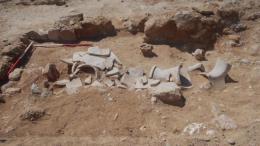 Φωτογραφία από ανασκαφές στην Κύπρο. ΚΥΠΕ