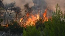 ΦΩΤΟΓΡΑΦΙΑ ΑΡΧΕΙΟΥ από παλαιότερη πυρκαγιά. ΑΠΕ-ΜΠΕ/ΚΩΣΤΑΣ ΣΥΝΕΤΟΣ