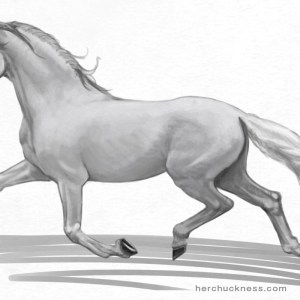 horse anatomy - surface