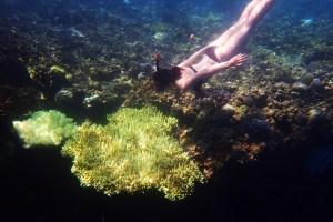Snorkeling in Menjangan Island Bali 17