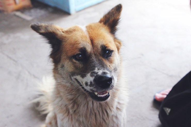 stray-dogs-in-bali-8
