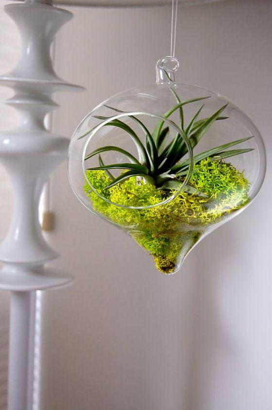 bonito diseño de plantas para decorar