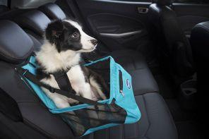 Transporte o seu pet com segurança no carro