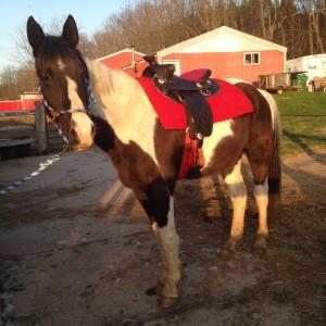 big horn saddle horse