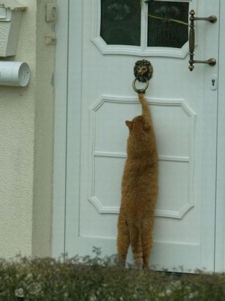 Batendo na porta