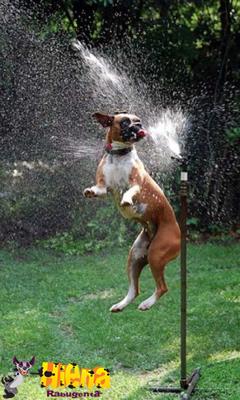 cachorro brincando com agua