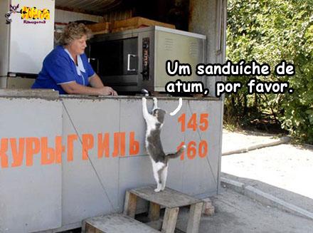 gato russia