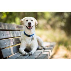 Small Crop Of Mellow Dog Breeds