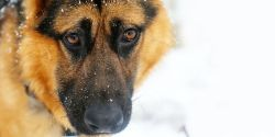 Shapely Quasi Is New Dog Short Spine Dog Meme Pig Short Spine Dog