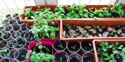 Imposing Vegetable Garden Ideas How To Grow Vegetables S Growing Potatoes S Bags Growing Russet Potatoes S
