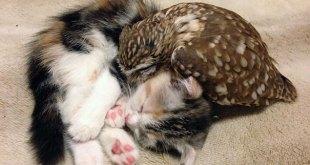 kitten-owl-best-friends-fuku-marimo-hukulou-coffee-japan-17
