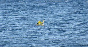 CANAKKALE, TURKEY - JULY 3: 10 month-old baby Melda Ilgin is seen as she drifts a kilometer out to sea on a sea buoy in Ayvacik district of Canakkale province, Turkey on July 3, 2015. (Photo by Hanife Erdinc/Anadolu Agency/Getty Images)