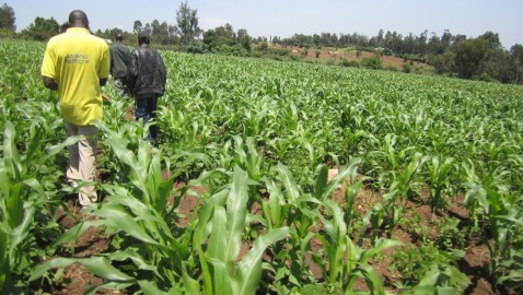 The Destabilization of African Agriculture: USAID Brings Deadly GMO Seeds To Northern Nigeria