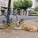 bike.protect.5things001.jpg