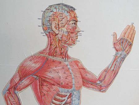 vintage acupuncture chart showing the upper torso and head