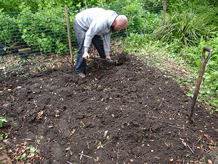 Justin digging beds on our allotment in May 2015