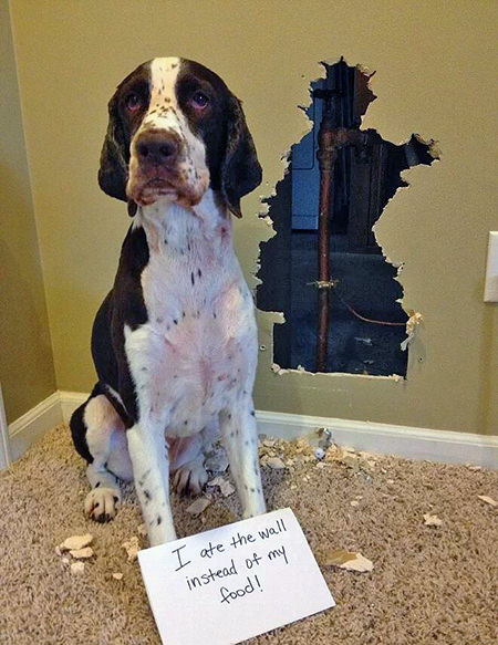 dog ate a hole in the wall