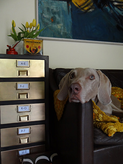 Brass Stow chest of drawers from MADE.COM with Fudge the Weimaraner