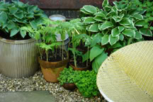 hostas growing in posts and vintage dolly tubs