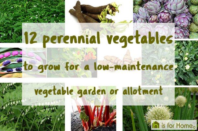 12 perennial vegetables to grow for a low-maintenance vegetable garden or allotment | H is for Home
