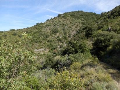 Sur la surface la moins boisée. Route Dpt 7, km 2 après Sournia, altitude 600 m. Au premier plan le Sentier des Ponts romains, ancienne route de Sournia à Estagel.