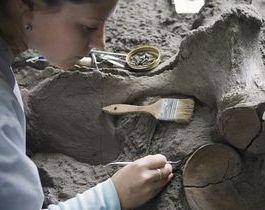 Skelet mammoet gevonden in centrum Los Angeles