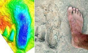 Voetafdrukken van 1,5 miljoen jaar oud gevonden