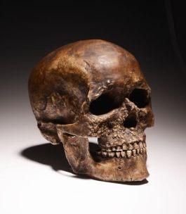 Replica van een neanderthaler-schedel (RMO)