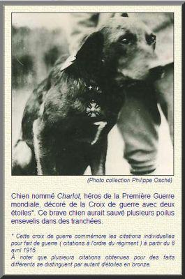 Hond Charlot gespecialiseerd in het opsporen van soldaten in loopgraven die door bombardementen levend onder de grond terecht komen hier als oorlogsheld gedecoreerd