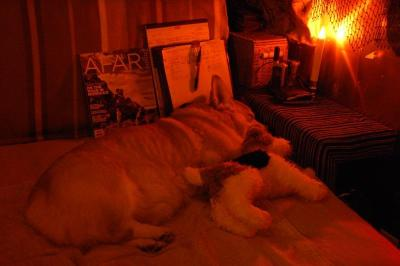 dsc_0054-mac-and-dolly-sleeping.jpg