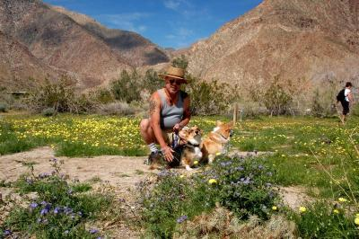 dsc_0123-larry-corgis-wildflowers.jpg
