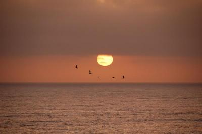 dsc_0198-pelican-sunset.jpg