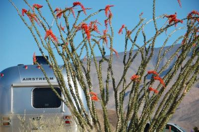 dsc_0055-camped-next-to-ocotillo.jpg