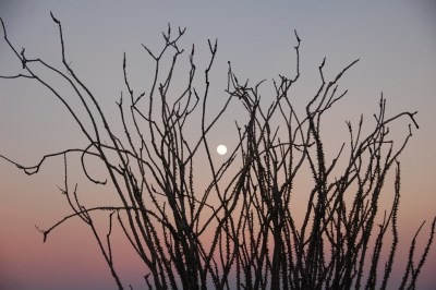 DSC_0282 Desert full moon & ocotillo